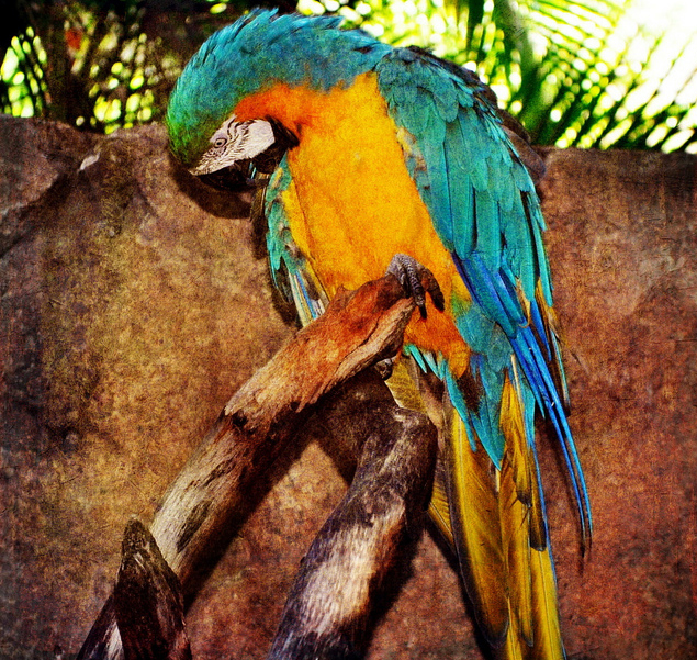 Зоопарк Palm Beach Zoo, Флорида