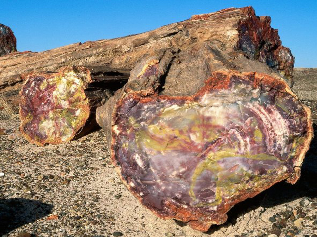 Деревьев petrified forest national park и painted desert az