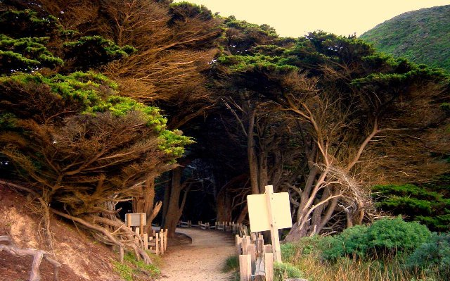 Pfeiffer Big Sur State Park, Julia Pfeiffer Burns