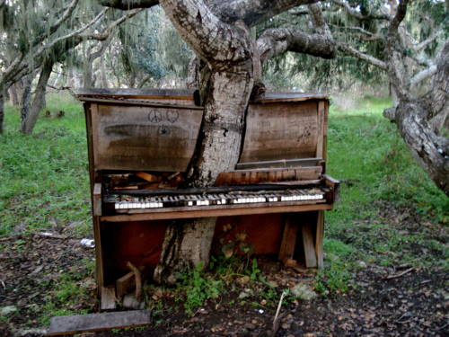 Дерево-пианино (Piano tree) в Monterey California
