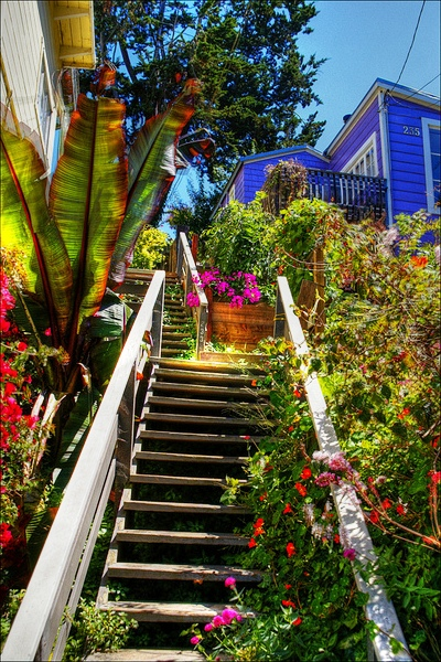 Ступени на Телеграфном Холме Сан Франциско The Stairs of Telegraph Hill, Башня Койт (Coit Tower)