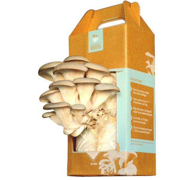 Оригинальные и необычные подарки: набор для выращивания грибов дома