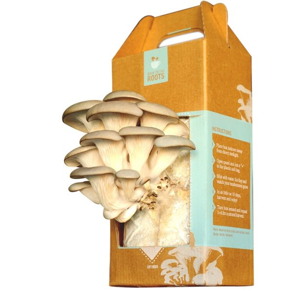 Набор для выращивания грибов Back to the Roots Gourmet Grow-at-Home Mushroom Kit