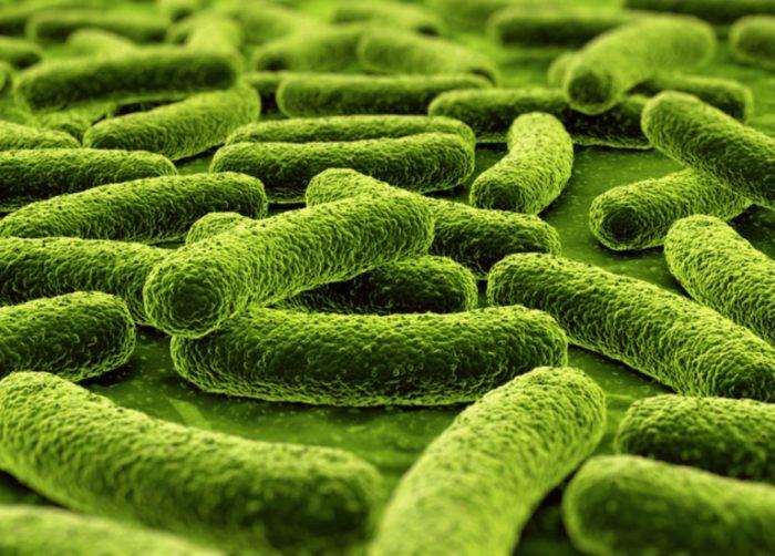 Пропионовые бактерии Propionibacterium acnes и Propionibacterium granulosum как причина возникновения прыщей (акне, угрей, комедонов)